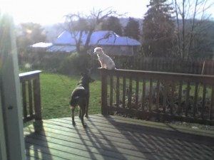 Duke and Bryan on the Deck